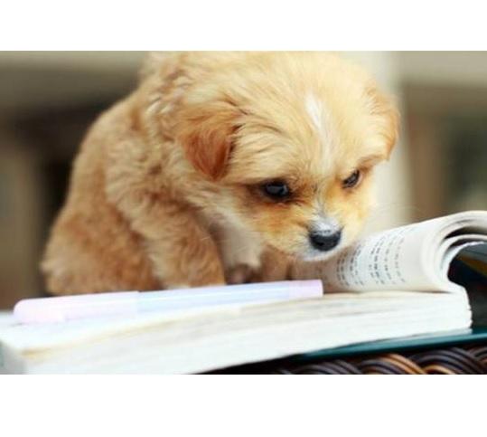 読書する仔犬