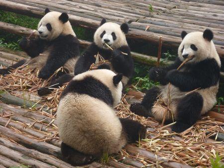 中国語 パンダ